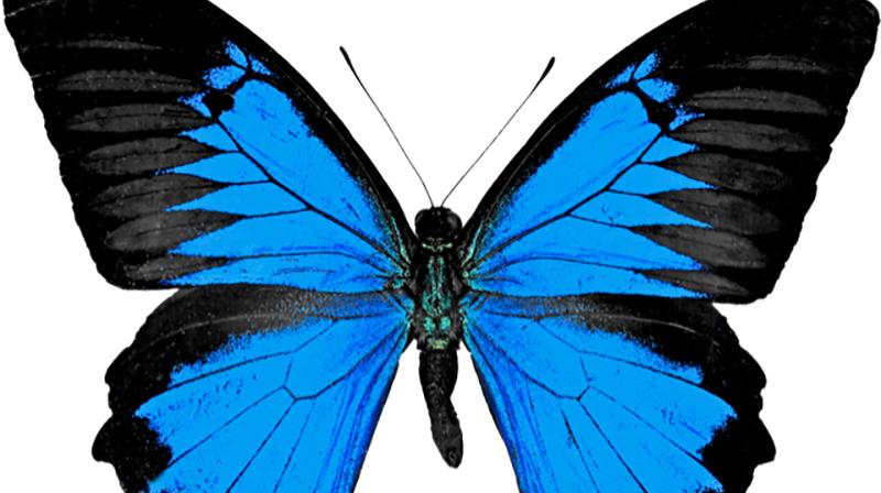 Sköldkörteln (tyreoidea) ser ut som formen av en fjäril.